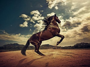 6948797-rising-horse