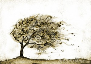 tree-autumn-storm-7071070
